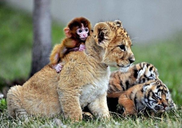 Зоопарки Китая
