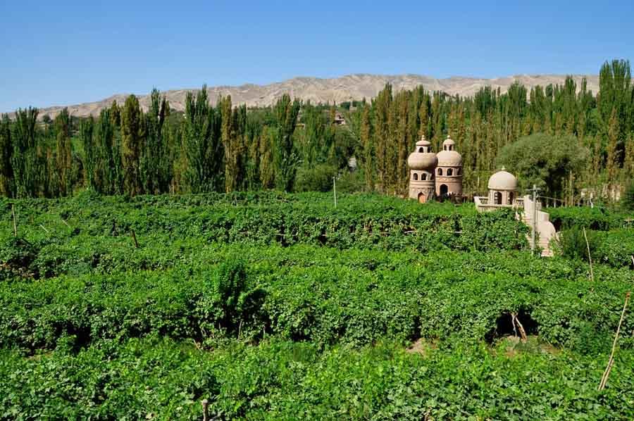 Турфанская долина виноградников